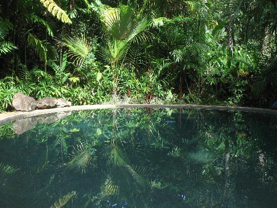 Daintree Rainforest Retreat