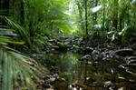 Daintree, Daintree Rainforest, Cape Tribulation