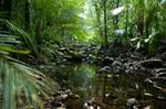 Daintree, Daintree Rainforest, Cape Tribulation