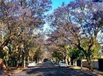 Unley, Adelaide