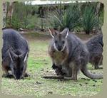 Kangaroo Island, Kangaroo Island