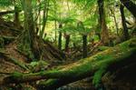 Fern Tree Gully, Fern Tree Gully and the Dandenong Ranges