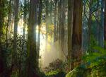 Sassafrass, Fern Tree Gully and the Dandenong Ranges
