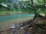 Diwan, Daintree Rainforest, Cape Tribulation